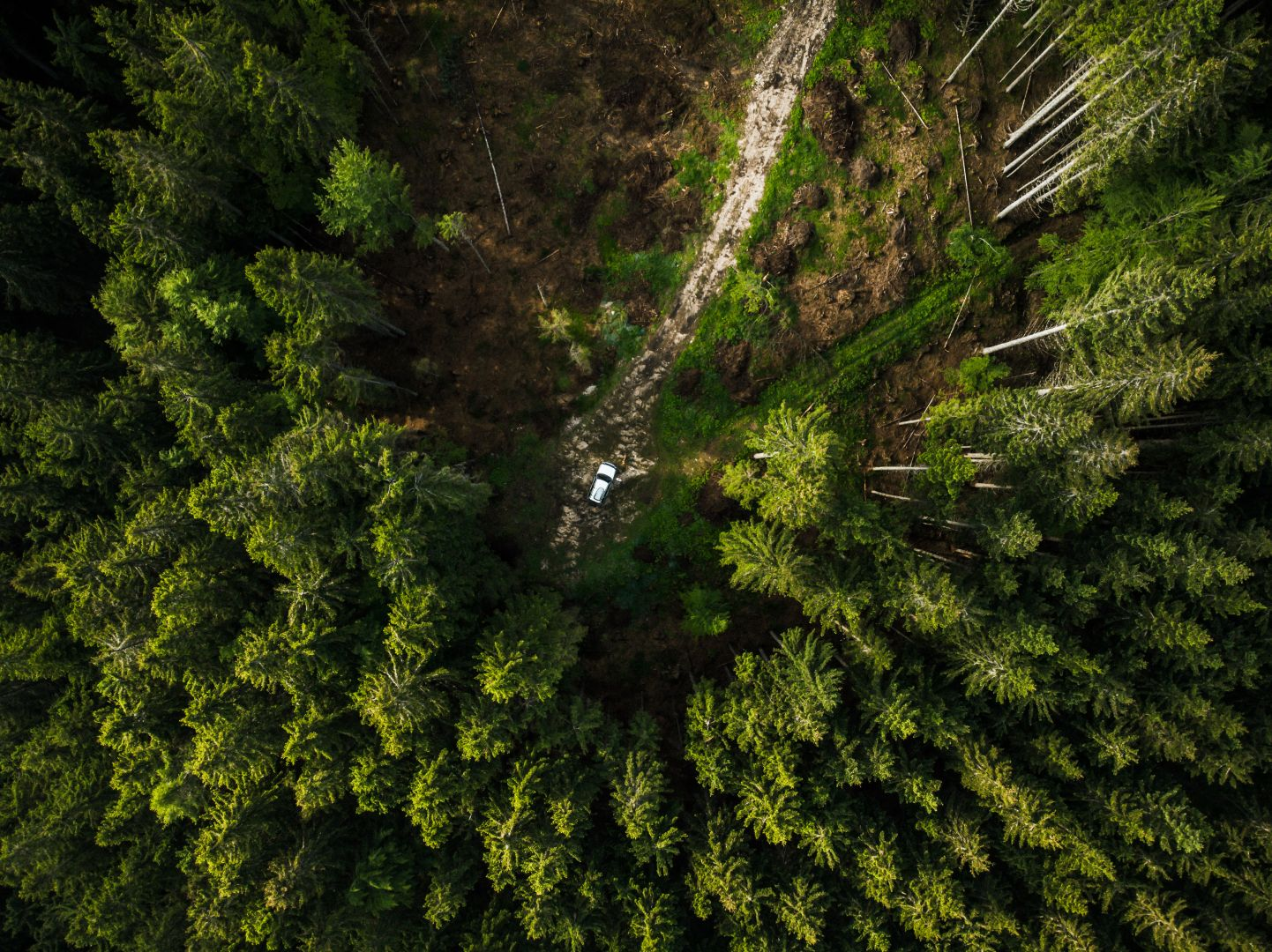 off-road-car-in-the-middle-of-forest-aerial-top-G48TF5X